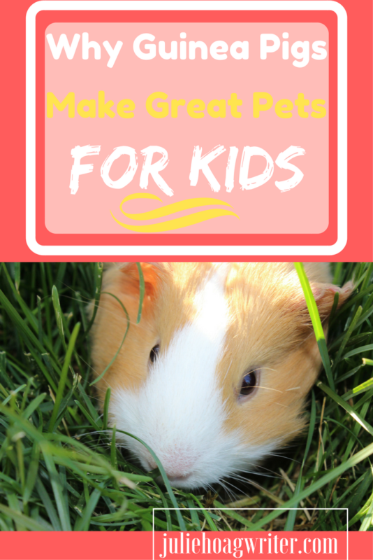 Guinea Pigs make great pets for kids. Kids will learn important caretaking skills plus have a pet to snuggle and love. guinea pigs | guinea pig ideas | guinea pigs funny | guinea pigs pets | pets | kids | family pet | pets guine pigs | pets guide | pets care | pets for kids | guinea pig video going up the stairs