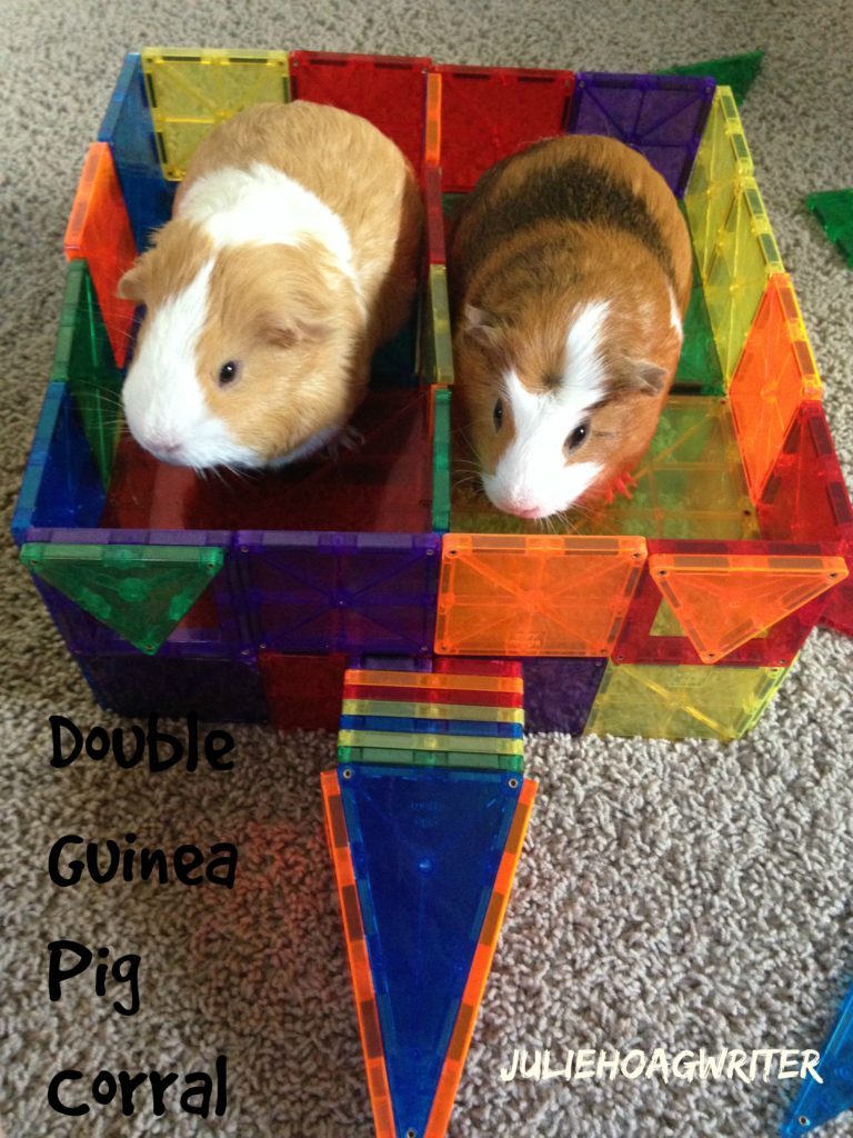 Double corral for guinea pigs made from Play Mags magnetic plastic toy shapes