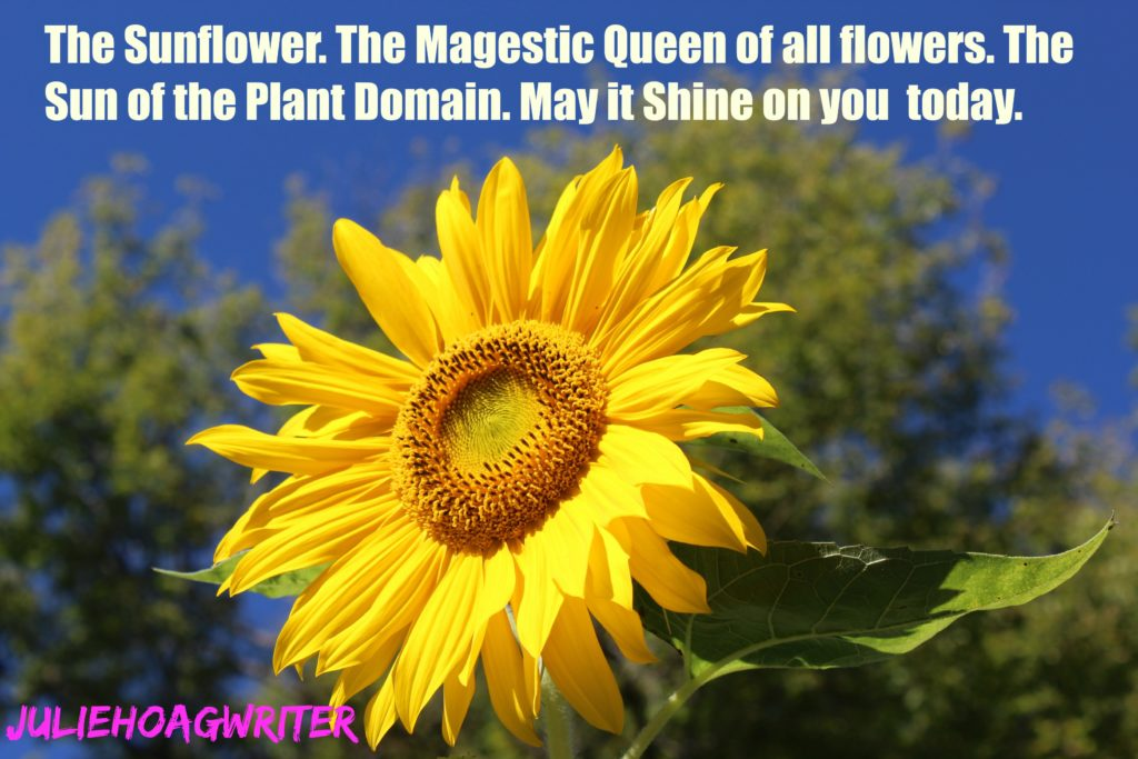 sunflower-magestic-queen