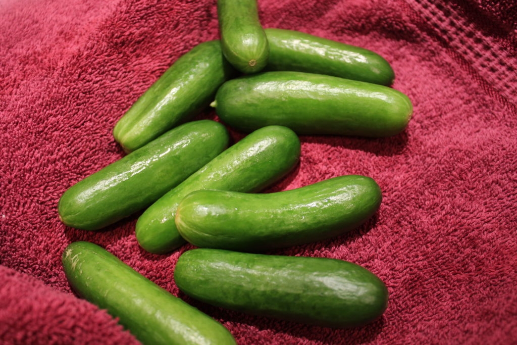 Mini cocktail cucumbers