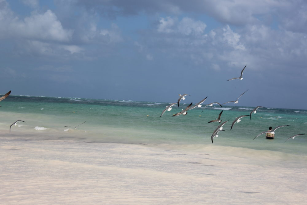 Flying birds at the beach