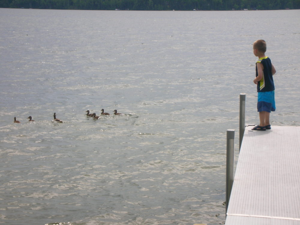 Preschoooler looking at ducks off a dock