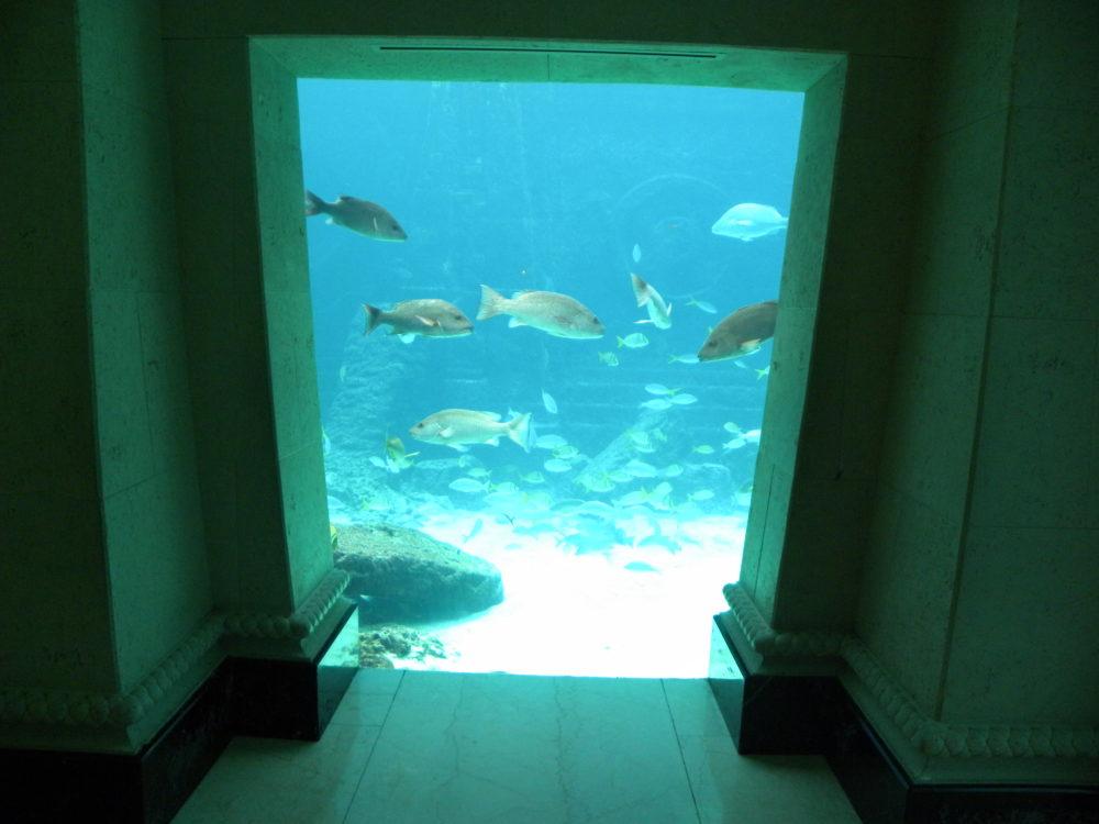Fish Tank at Atlantis Resort