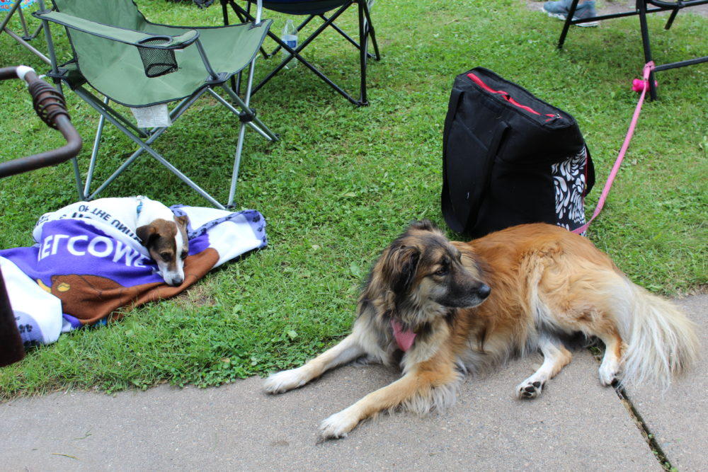 Dogs lounging at campsite