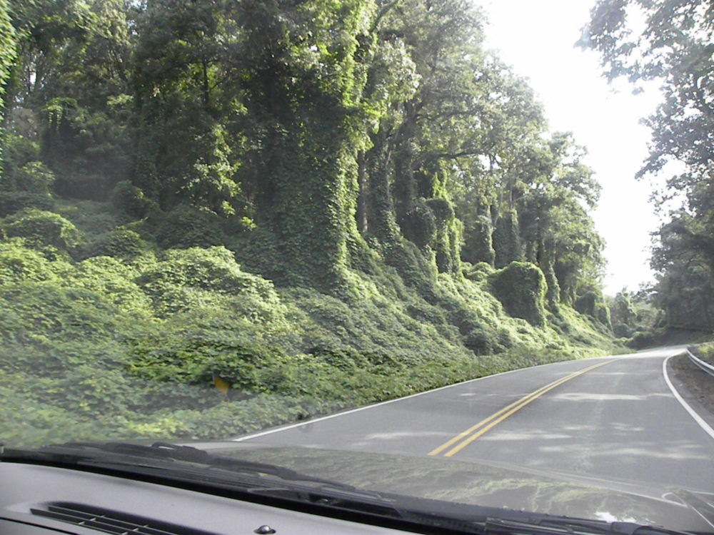Gorgeous foliage over the trees on the sides of the road while driving over the Appalachian mountains.