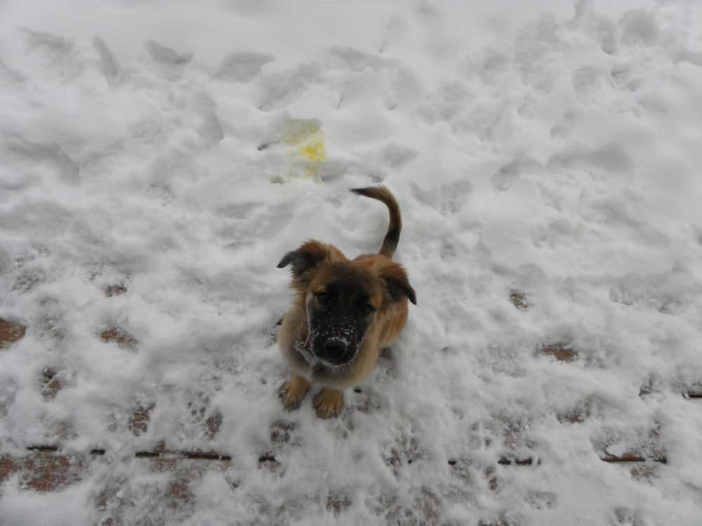 Puppy outside in the snow. Play time