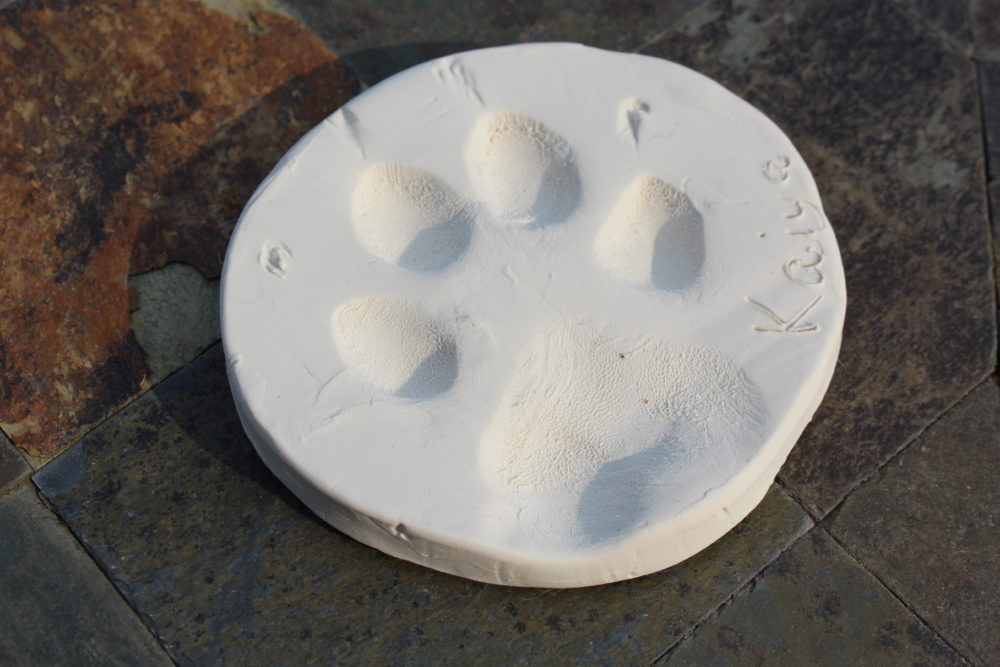 Paw print memory imprint on clay