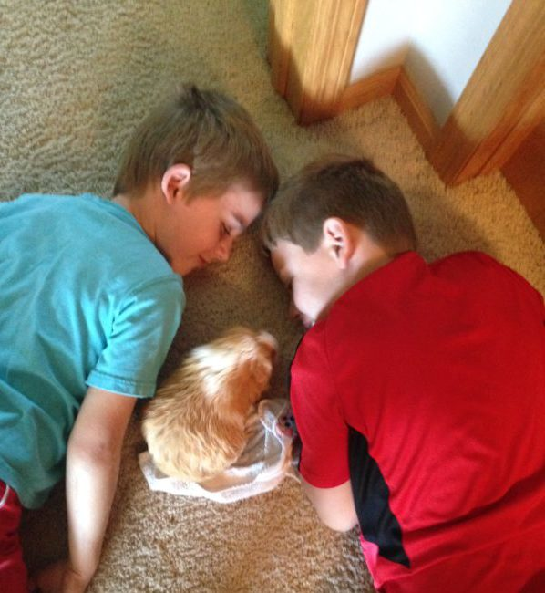 Kids interacting with pet guinea pig. 10 tricks get guinea pigs interacting family. #guineapigs #pets #familyfun #animals #compassion #empathy #kids #familypet #smallanimal #smallanimalpets #animals