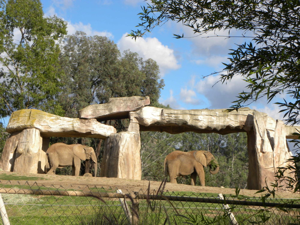 San Diego Zoo Safari Park elephants standing under rock structure. #zoo #sandiego #california #visitcalifornia #familyfun #attractions #familytime #elephants