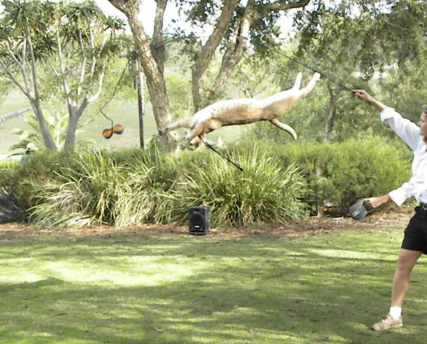 San Diego Zoo Safari Park jumping cat encounter. #sandiego #california #visitsandiego #sandiegozoosafaripark #familytime