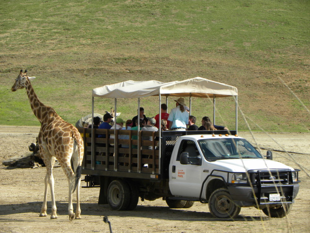 San Diego Zoo Safari Park safari tour near animals #zoo #sandiego #sandiegozoosafaripark #visitcalifornia #tourism #touristattraction #animals #education