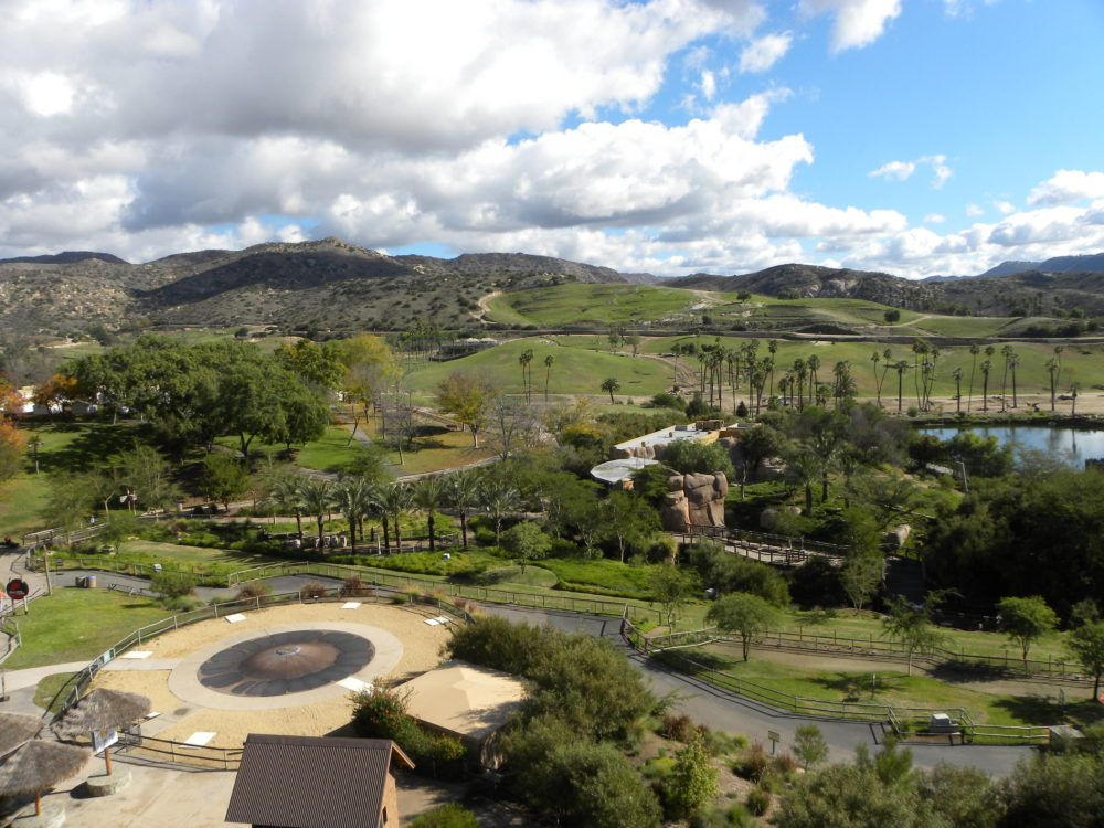 San Diego Zoo Safari Park view. #zoo #sandiegozoosafaripark #sandiego #attractionsinsandiego #visitcalifornia #familyfun