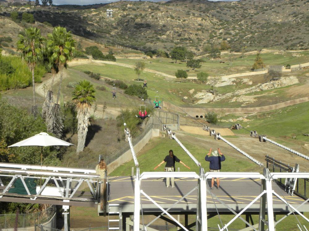 San Diego Zoo Safari Park zip line #zoo #sandiegozoosafaripark #zipline #visitcalifornia #familyfun #touristattractions #animals #familyfun #familyactivity