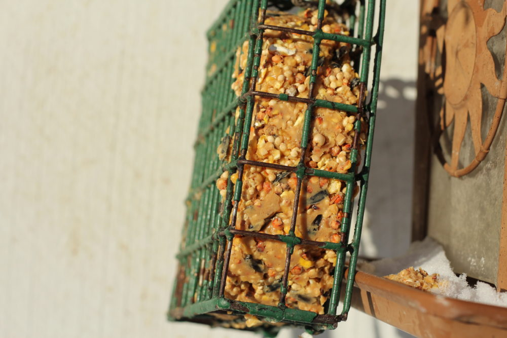 DIY Peanut Butter Bird Seed Suet in cage side view #diy #diyproject #kidscrafts #feedthebirds #birds #wildlife #familyfun #kidsactivities