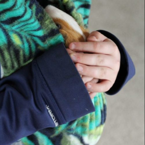 Guinea Pig Fleece Snuggle Sack For Unparalleled Bonding Critter Cuddler and boy