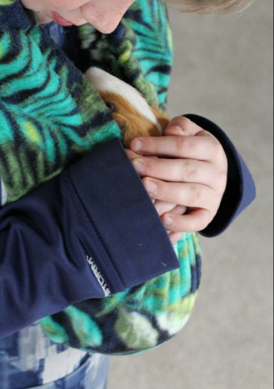 Guinea Pig Fleece Snuggle Sack For Unparalleled Bonding Critter Cuddler and boy. A perfect guinea pig accessory to bond with and socialize your guinea pig. It is washable, durable, soft fleece and very comfortable for both the pet and the person wearing the bonding bag.