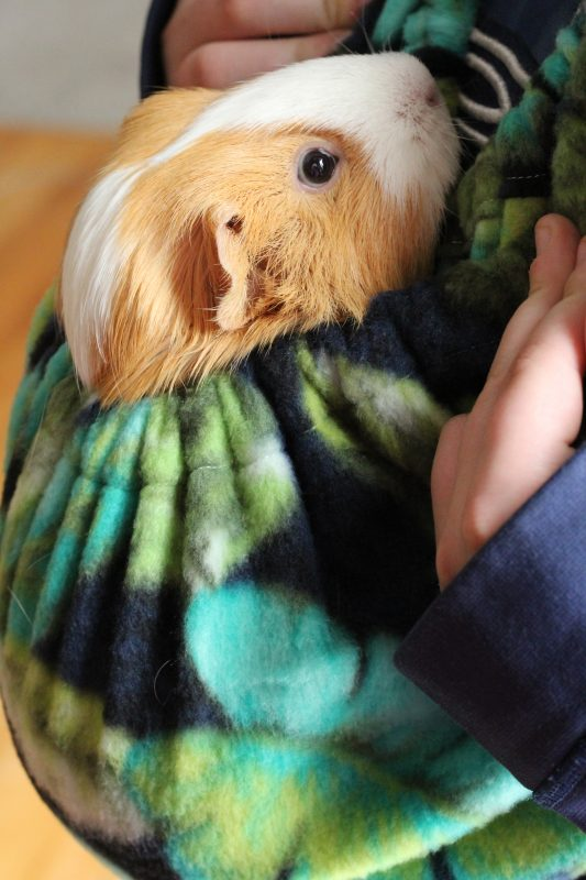 Guinea Pig Fleece Snuggle Sack For Unparalleled Bonding Critter Cuddler. A perfect guinea pig accessory to bond with and socialize your guinea pig. It is washable, durable, soft fleece and very comfortable for both the pet and the person wearing the bonding bag.