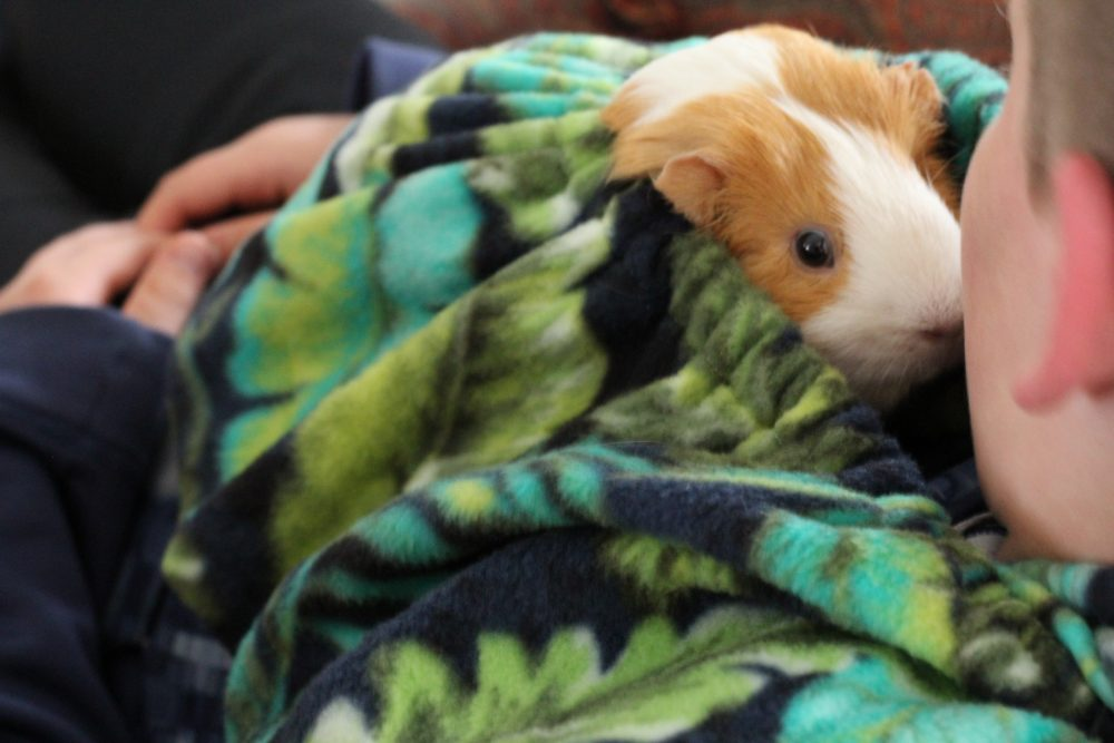 Guinea Pig Fleece Snuggle Sack For Unparallelled bonding and snuggling while sitting down watching tv or a movie. Perfect bonding bag guinea pig accessory every guinea pig owner will love.