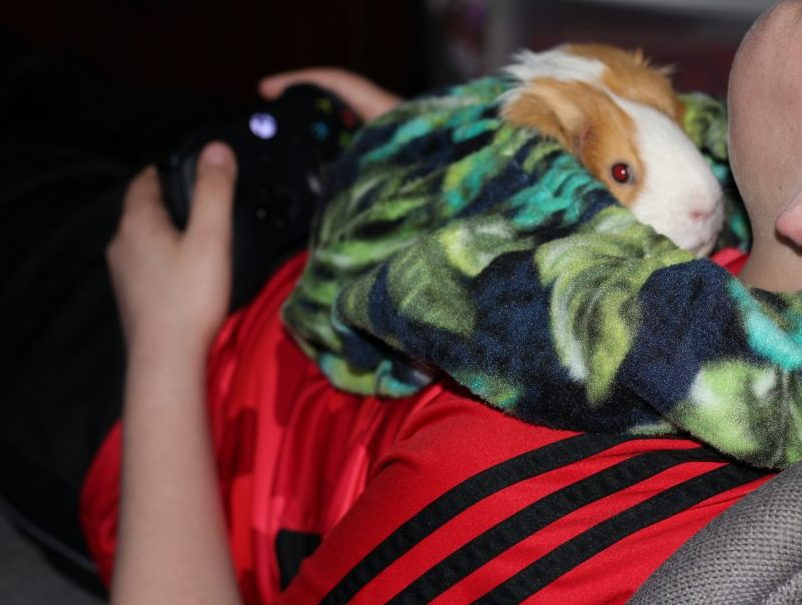 Guinea Pig Fleece Snuggle Sack For Unparalleled Bonding while playing video game. This guinea pig fleece is a perfect guinea pig bonding bag. It is soft, durable, and washable.