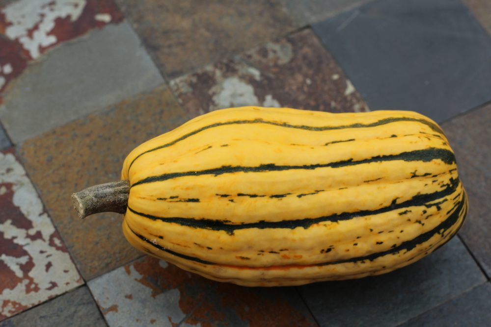 Delicata squash vegetable