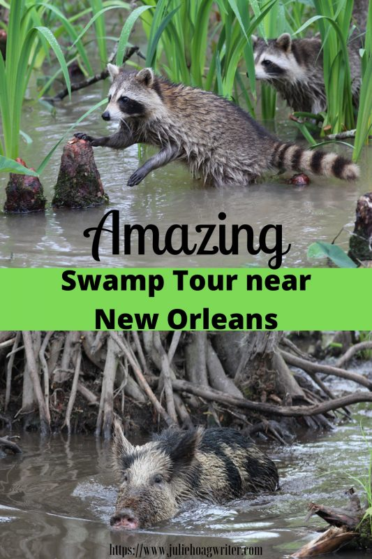 swamp tour near New Orleans