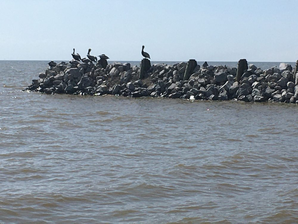 Pelicans on the rock pier Seaside House Rentals