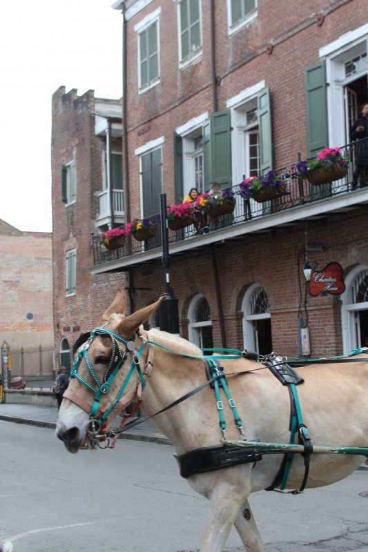 beautiful horse in New Orleans